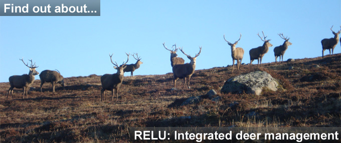 Deer pic and link to RELU: Integrated Deer Management project page