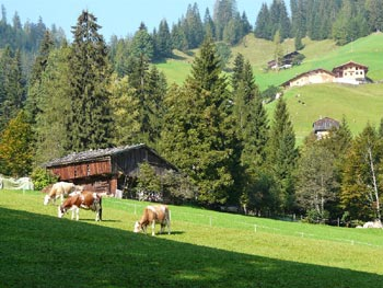 Hut and cows, Austria. © Gunter Prager