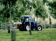 Tractor & fertiliser spreader in ash trees